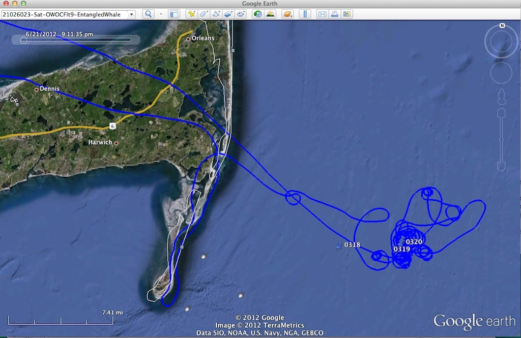 20120623-OWOCFlt9-CCod-EntangledWhale-MAP.jpg
